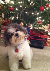 Buddy Christmas